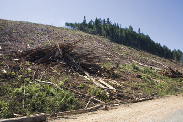 Vancouver Island clearcut